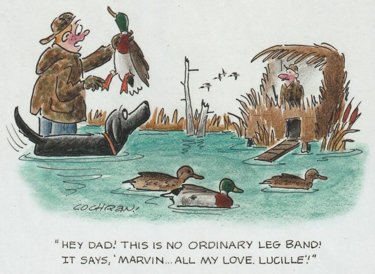 """Cartoon of duck hunters holding up a duck with the caption """"Hey Dad! This is no ordinary leg band! It says 'Marvin... all my love. Lucille!'"""""""