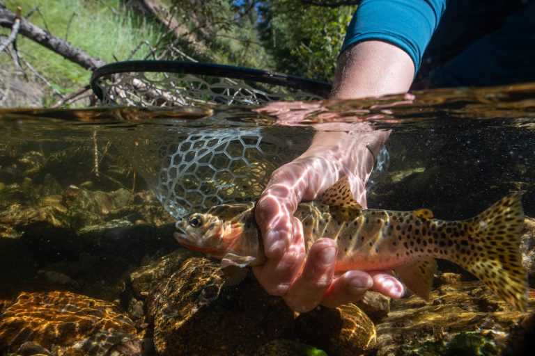 A hand holds a fish and net underwater