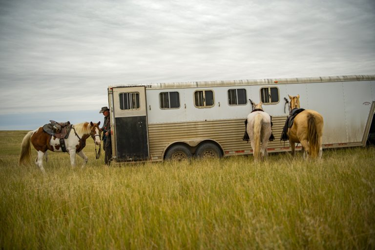A horse trailer in a grassy field