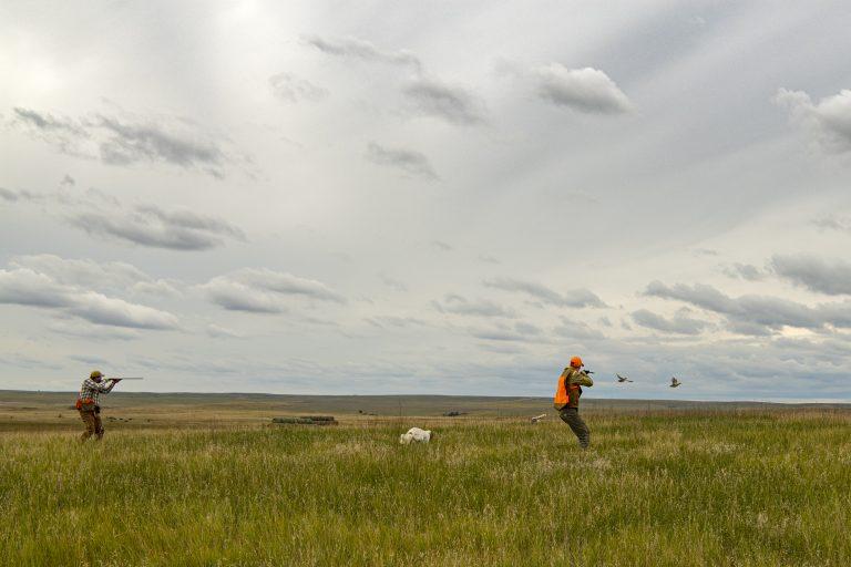 A hunter in a grassy field